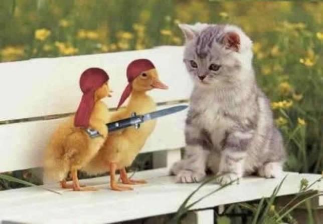 gangsta_chickens.jpg