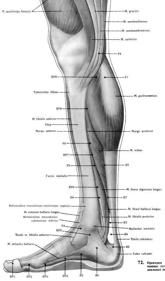 Atlas ankle and foot inner wiev