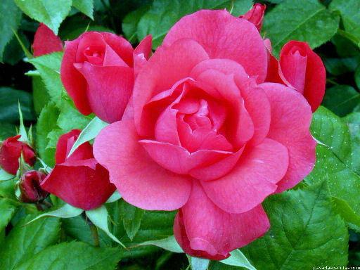 Flores for 5 plantas ornamentales con sus nombres