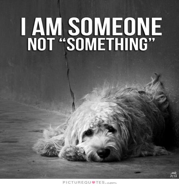 Animal Rights Quotes Amazing Rene's Websitethe Greatest