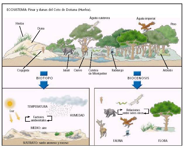 CONOCIENDO LA NATURALEZA: el ecosistema