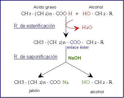 Formula General de Los Acidos Grasos Los ácidos Grasos Más Comunes