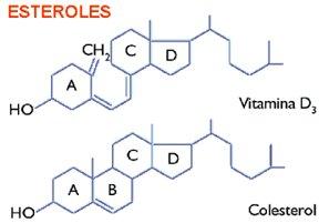 sintesis de esteroides mitocondria