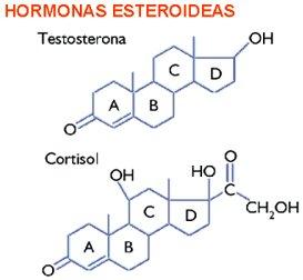 esteroides hormonas