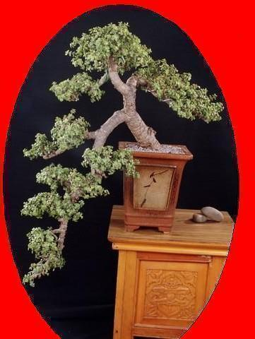 Bonsai_Rao.com - Hyderabad & Secunderabad