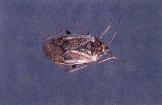 Se d barrasser des fourmis astuce jardinage comment se d barrasser des fourmis - Comment se debarrasser des guepes ...