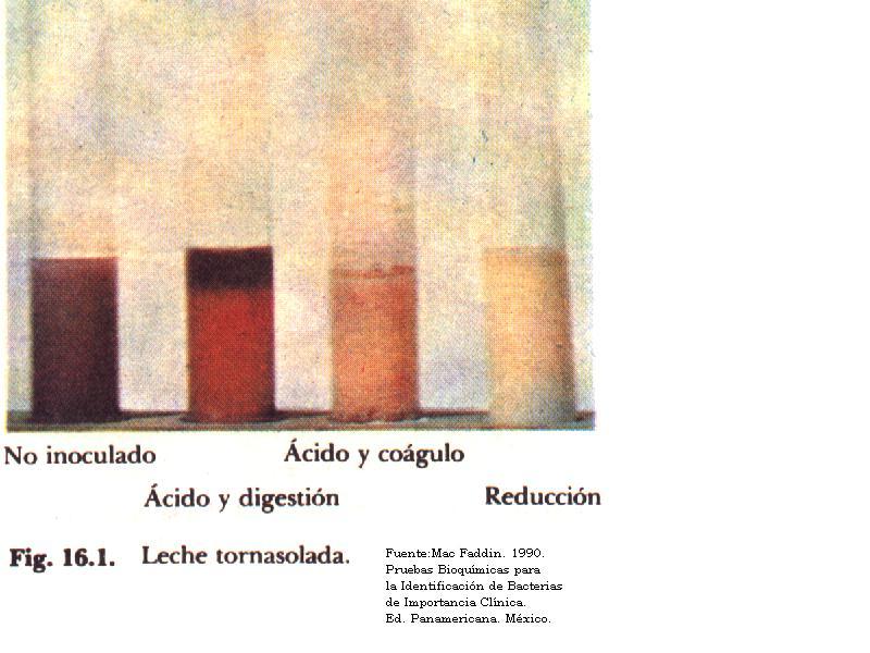 calidad microbiologica leche: