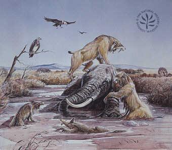 Smilodon Hunting | www.pixshark.com - Images Galleries ...