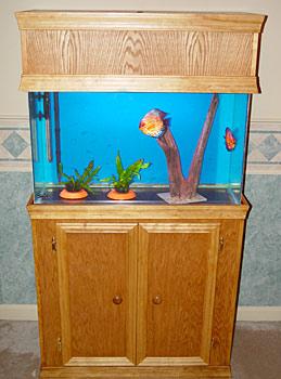 29 gallon aquarium discus fish tank for 29 gallon fish tank stand