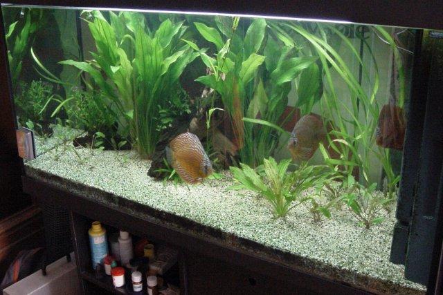 Ac discus for Fondo per acquario