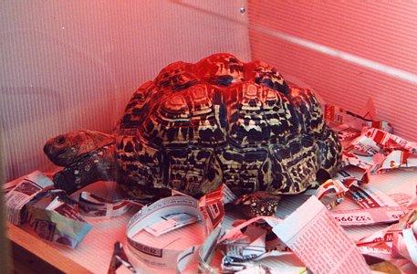 Fantasy Frogs Tortoise Home