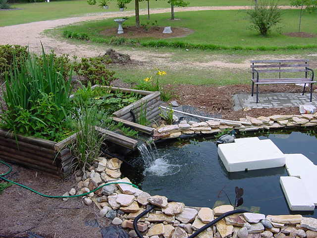 Plant filter 2 for Water filtering plants for ponds