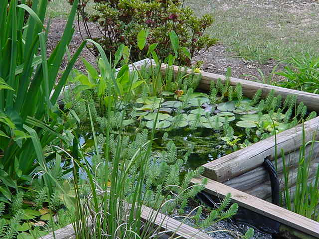 Plant filter 2 for Best pond plants for filtering