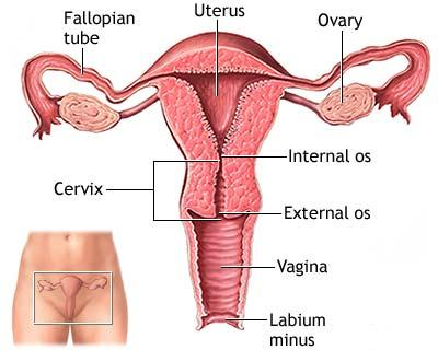 استئصال الرحم عن طريق المهبل