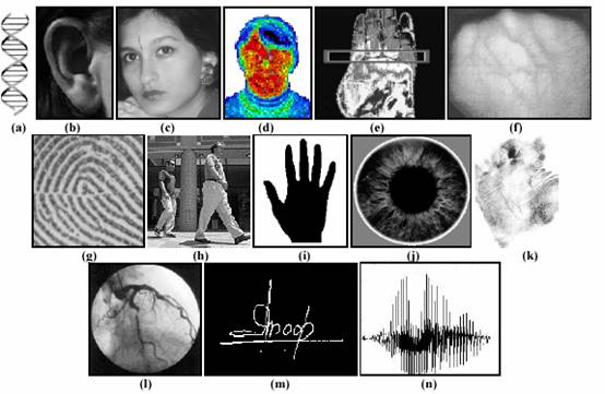 Examples Of Biometric Characteristics A DNA B Ear C Face D Facial Thermogram E Hand F Vein G Fingerprint H Gait