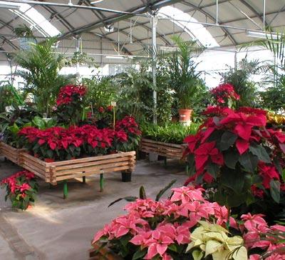 Garden center huerto san valero b i e n v e n i d o s Plantas de invernadero