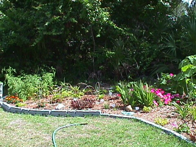 Awesome Garden Under Construction, Now Gone!!!. Plants Received From Trading On  GardenWeb. The Plants In This Section Included Clerodendrum, Paulownia.  Petunias,
