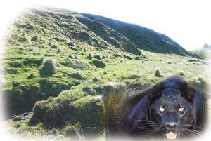 [Bild: panther.jpg]