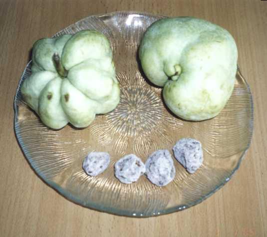 [Bild: guava.jpg]