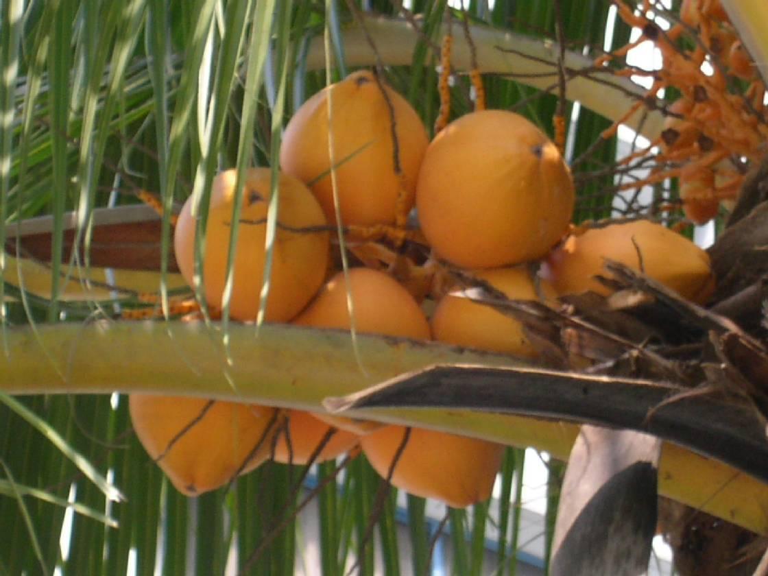 [Bild: kokosy.jpg]
