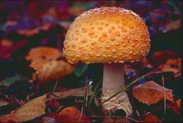 El medio público del hongo de las uñas en los pies el aceite acético y