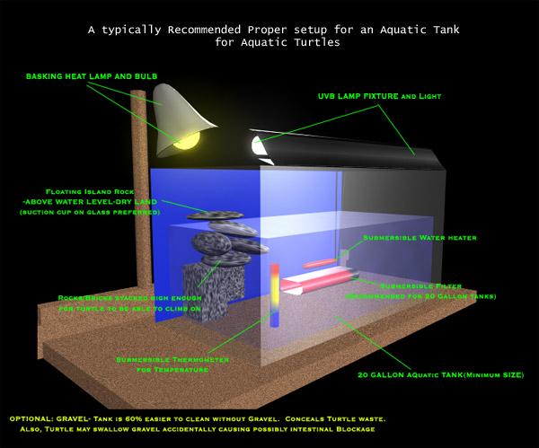 Turtle care and setup for Night fishing light setup