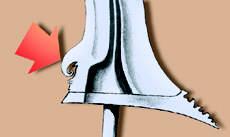 Tanda panah: Bagian yang disebut kembang kacang