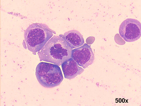 Preparation of cells for microscopy using