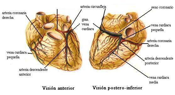Sistema de Oxigenación Cardíaca
