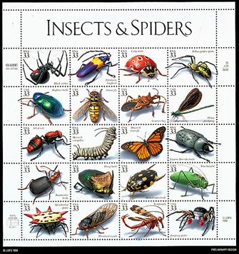 Examples of arthropods insects