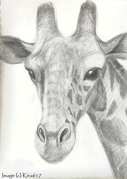 the gallery for giraffe head sketch
