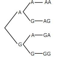 Materi pada diagram pohon diatas dan tabel kita bisa melihat pada koin pertama muncul angka maka pada uang kedua akan muncul angka lagi atau gambar ccuart Image collections