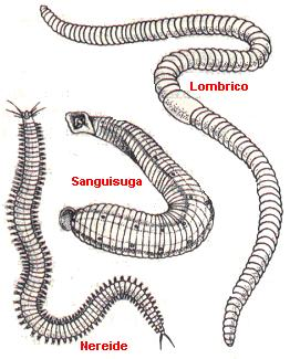 La serratura può essere a causa di vermi