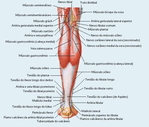 dor no quadril e pernas