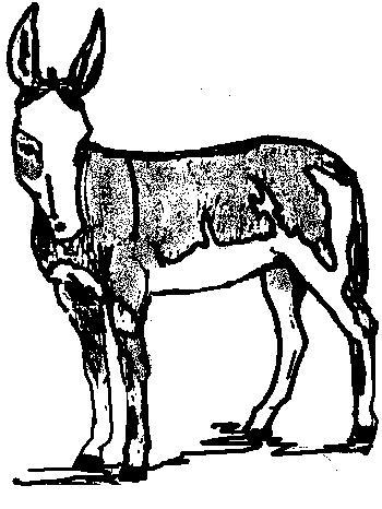 breeding for spotted donkeys All Breeds Of Shepherds gene 1 gene 2