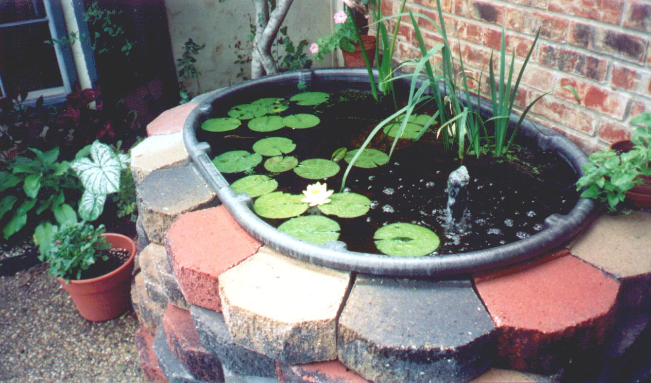 Garden2 for What fish should i put in my pond