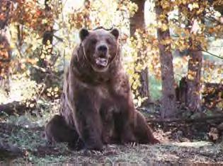 bart the bear doug seus