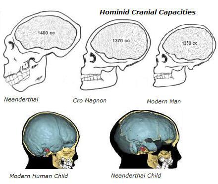 [Image: cranial_capacities.jpg]