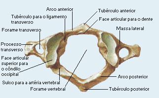 Atlas osso