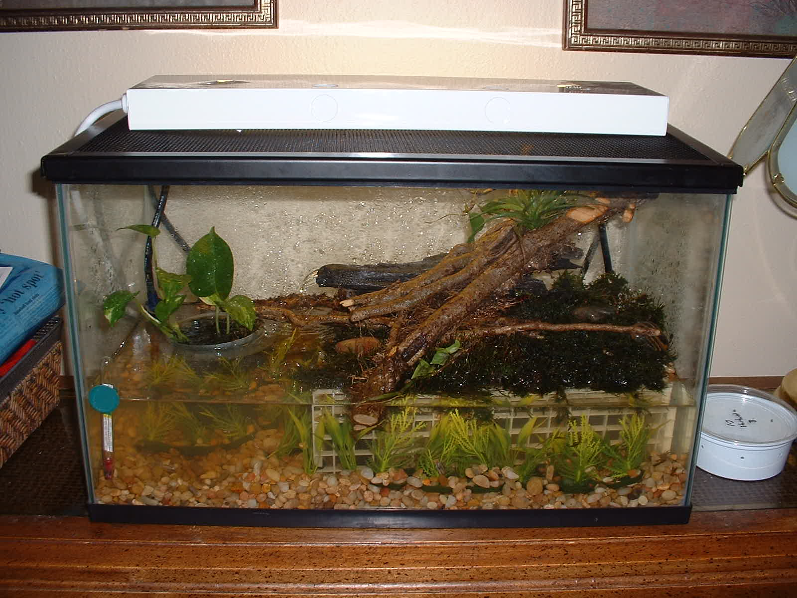 My Chinese Water Dragon And Frogs
