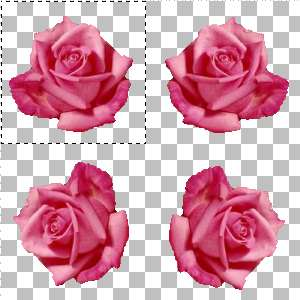 Rose copy and paste
