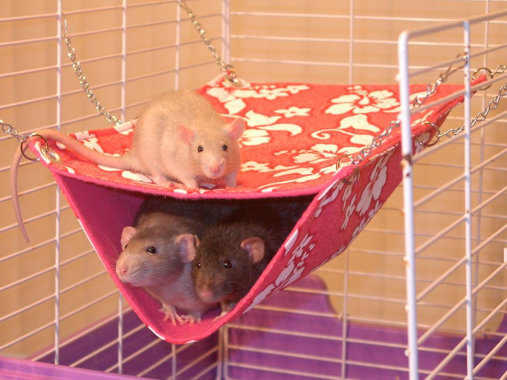 Как самому сделать домик для крыс
