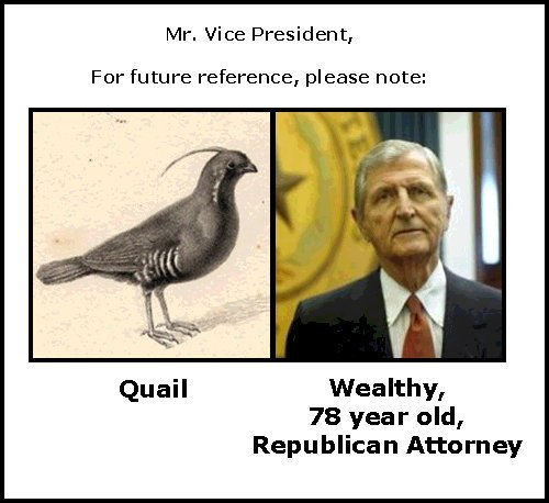 Dick cheney quail hot love