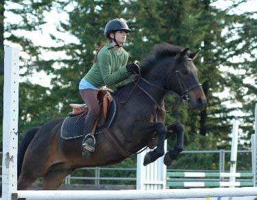Pony Land San Diego Beach Horseback Riding  Home