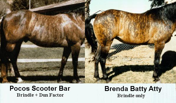 Historical References To Brindle In Horses