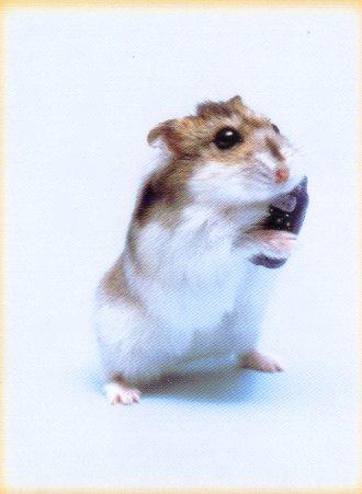 Hamster móvil